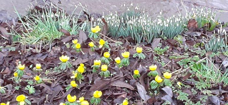Blühendes im Monat Januar (Von Costanza zur Verfügung gestellt)