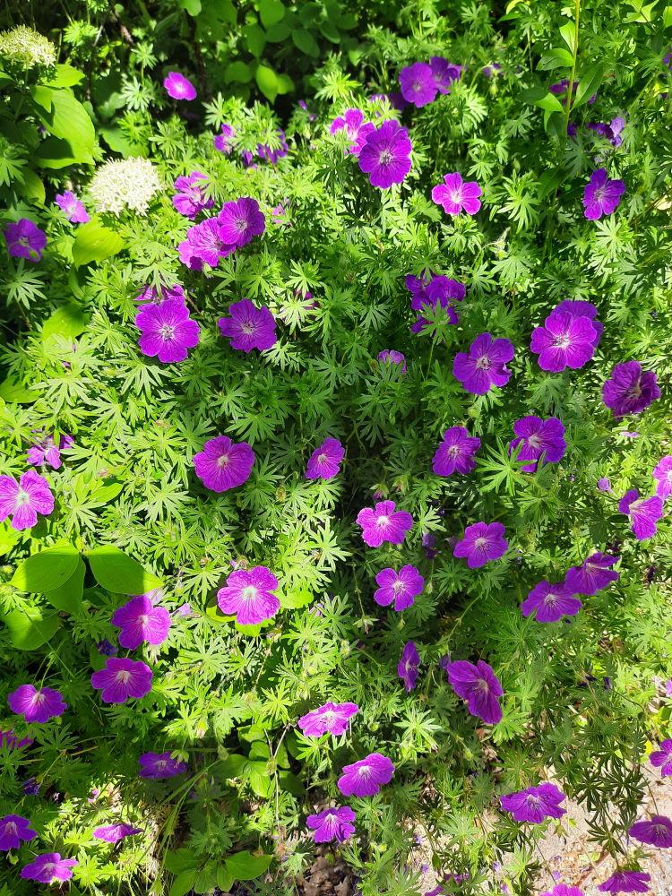 Eine wunderschöne Blütenpracht