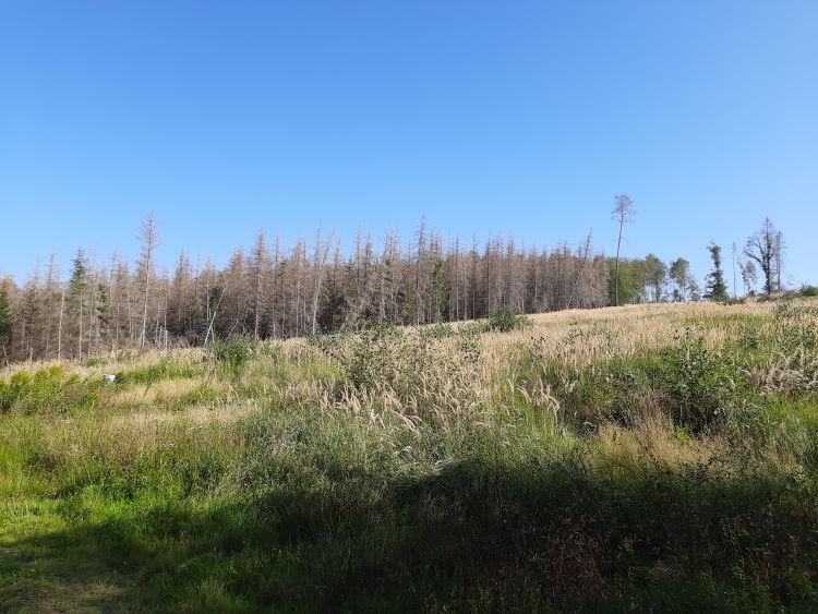 Ein abgestorbener Wald im Sauerland