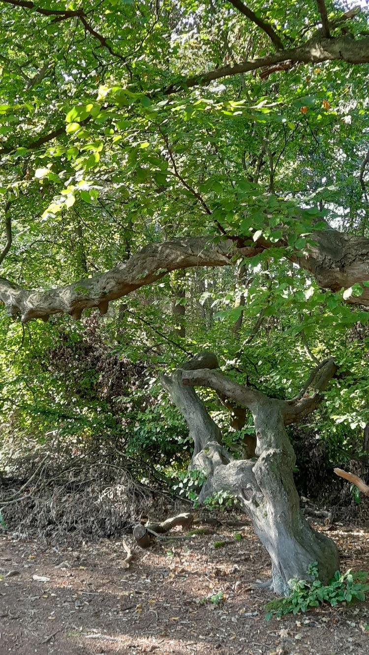 Ein Stück verwunschener Wald