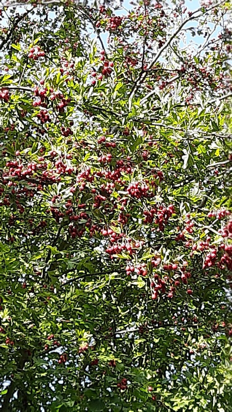 Ein wunderschöner Baum im Monat September